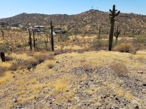 376xx N 34th Avenue Lot - Phoenix, Az 85086