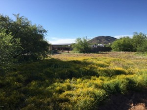 14xx E Blue Wash Road Lot - New River, Az 85087