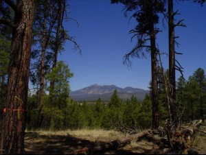 350 E John Weley Powell Boulevard Lot - Flagstaff, Az 86001
