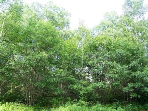 Lot 4 Mallard Lake Road Webster, Wi 54893