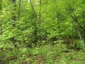 Xxx Lot 12 209th Street Eureka Twp, Wi 54024