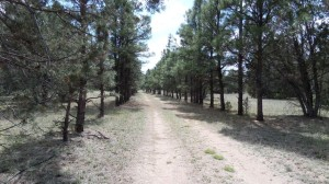 394 Forest Service 63 Road Lot 1 Young, Az 85554