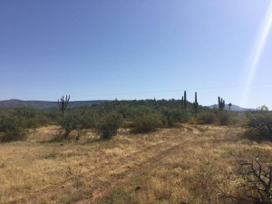 916 W Wolftrap Road Lot - New River, Az 85087