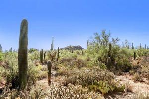 Reserve At Saguaro Park Unit 1-15 Tucson, Az 85745