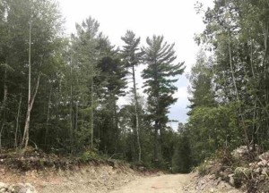 Parcel G Niles Bay Forest Buyck, Mn 55771
