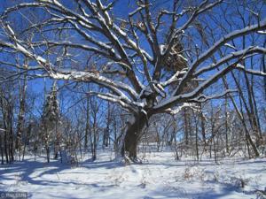 140xx Manning Trail N. Stillwater, Mn 55082