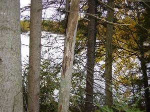 Lot 7 Hwy B Round Lake Twp, Wi 54843