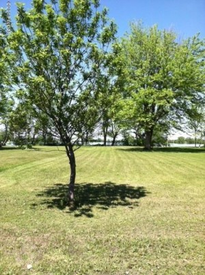 000 Shoreview Drive Cottonwood, Mn 56229