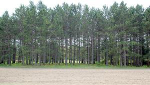 Tbd Woodland Hills Lane Brainerd, Mn 56401