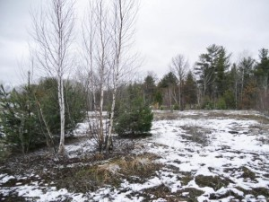 Peterson Road Sand Lake Twp, Wi 54893